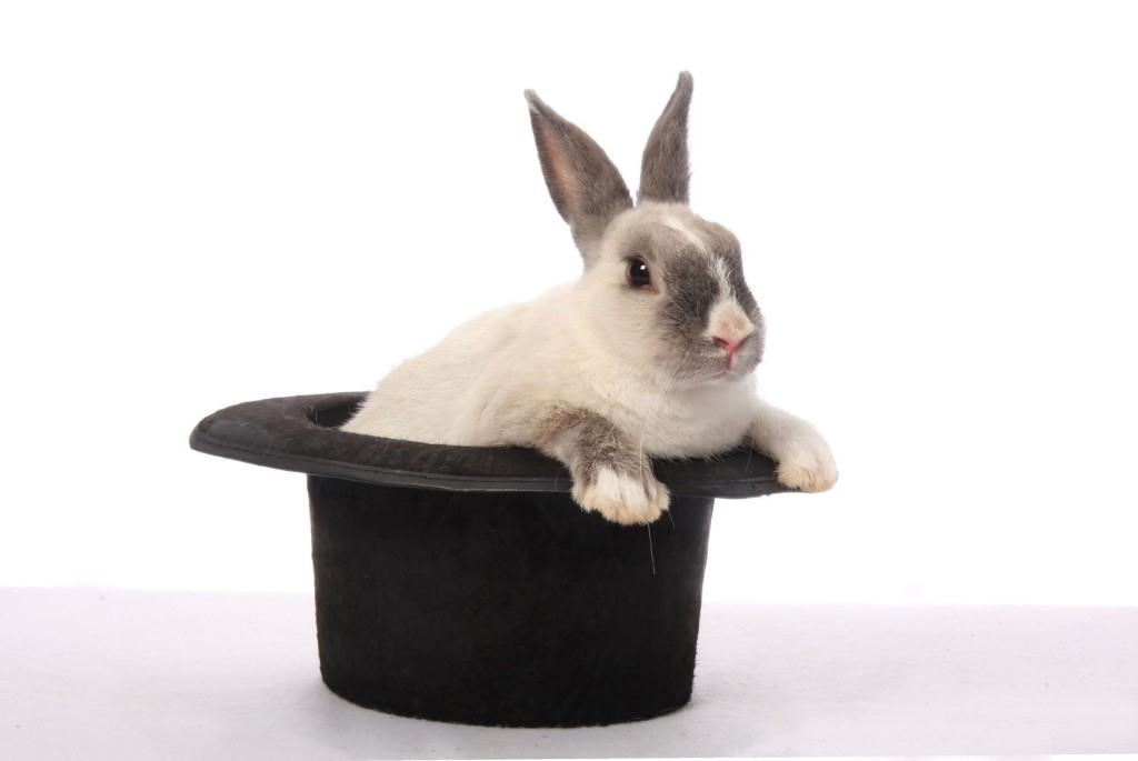 Cute bunny rabbit climbing out of a black hat (magician)